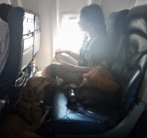 mila on plane