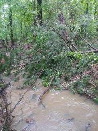 Our creek grows rapidly during rainfall